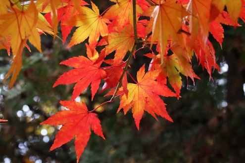autumn-leaves-3785129_1920