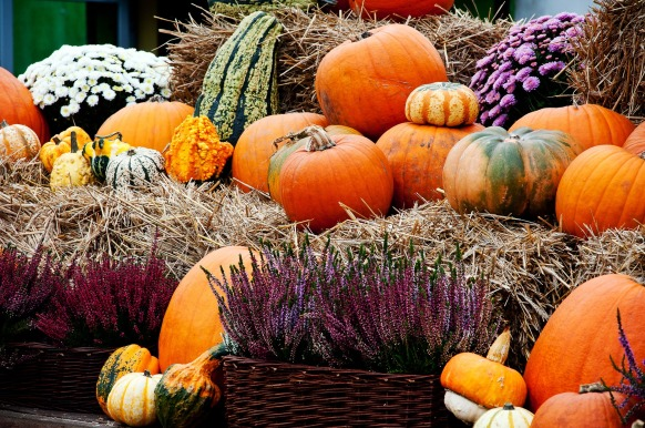 pumpkin-3002509_1920