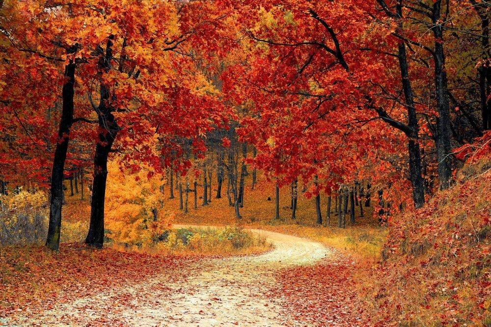 automne-libre-de-droit